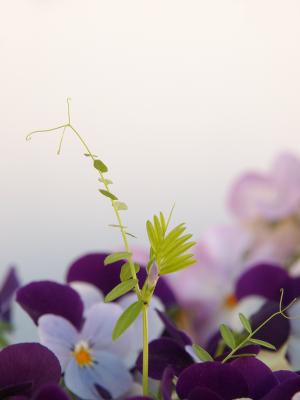 撮って見た 其の33 (春の草花 Ⅴ )-08