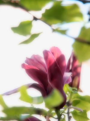 撮って見た 其の33 (春の草花 Ⅴ )-10