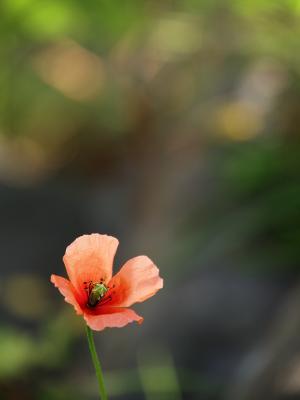 撮って見た 其の33 (春の草花 Ⅴ )-12