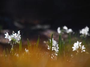 春遠からじ-2