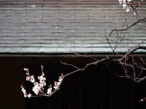 新宿御苑-06