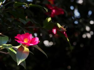 新宿御苑-09