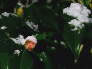 元旦の雪-3