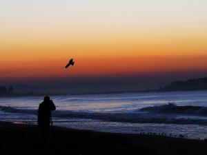 4日の朝も海岸で-04