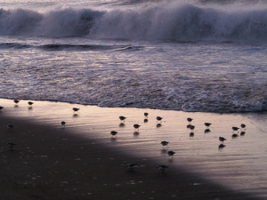 4日の朝も海岸で-06