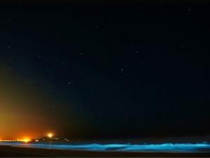 明るい金星を撮って見た-3