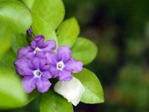 紫 くろ喜 其の142-2