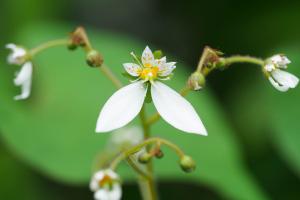 庭の花1_02