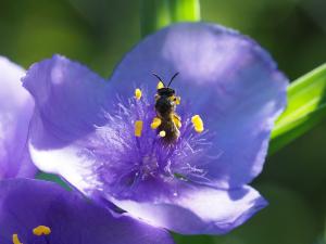 庭の花1_06