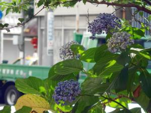 紫 くろ喜 其の144-1
